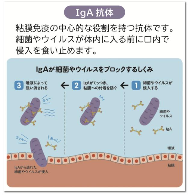 IgA抗体