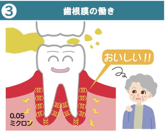 歯根膜の働き